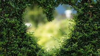 Босилек срещу изневяра, бръшлян за щастлив брак