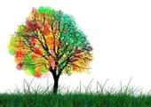 Последно подхранване за декоративни дървета и храсти
