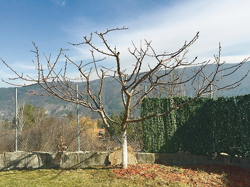 Санитарна резитба на дръвчетата