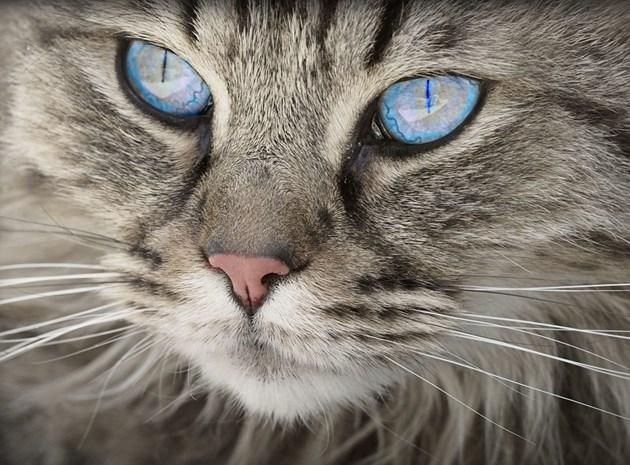Котка пренасяла на гръб мобилни телефони за затворници в Коста Рика