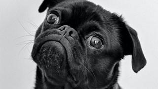 Бърз и лесен начин да дадете хапче на кучето си
