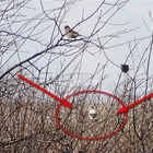 Бяло врабче спасява село