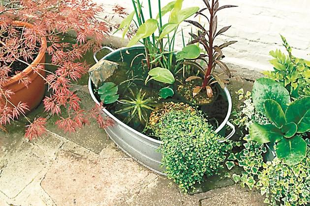 Мини водна градина от стар леген