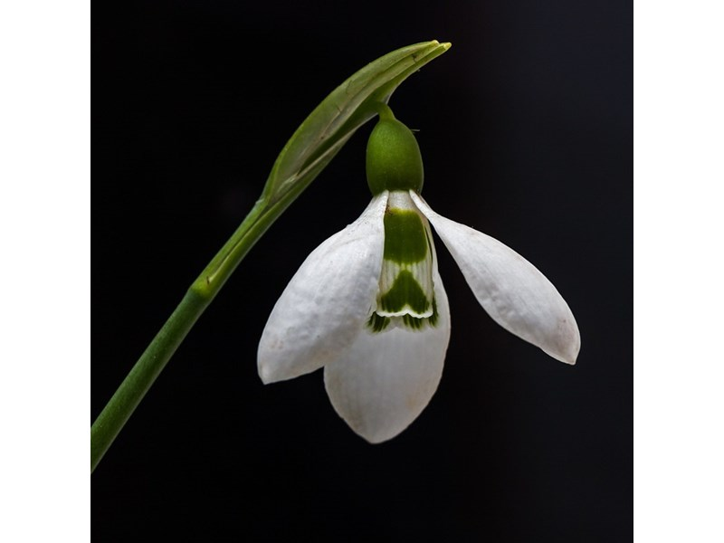 Резултат с изображение за Пролет през януари