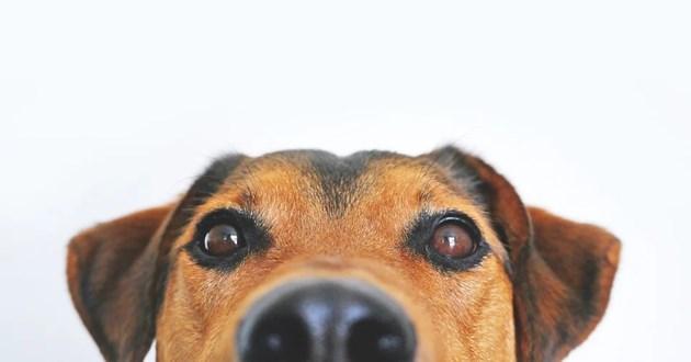 Предано куче чака три месеца в болница в Китай след смъртта на стопанина си