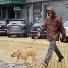 Трифонов разхожда червенокоска