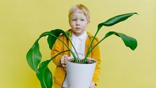 8 начина, по които листата на стайните цветя ни подсказват, че нещо не е наред