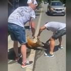 Спасиха блъснато еленче (Видео)