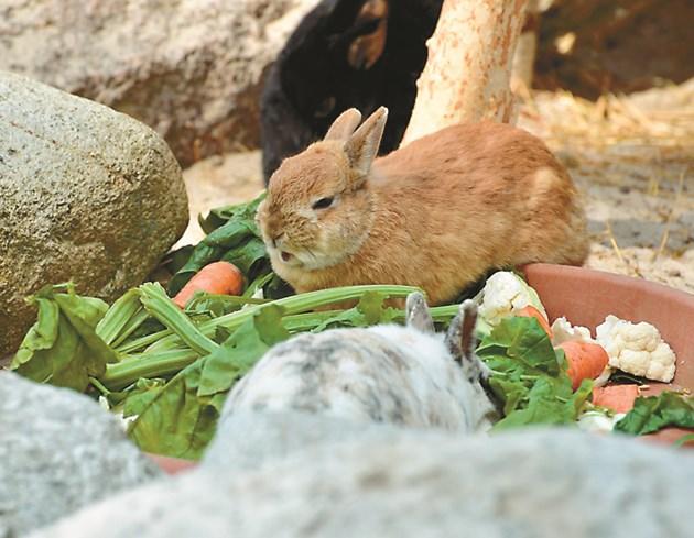 Давайте на зайците зеленчуци
