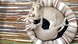 Причини да не изхвърляме старите калъфки за възглавници