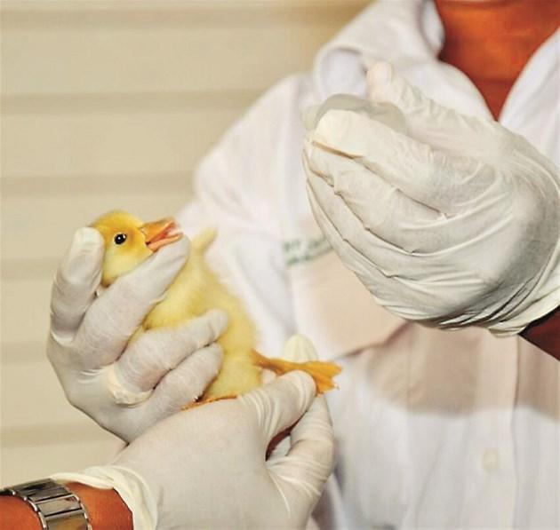Европейските ветеринарни организации си сътрудничат, за да разработят някои от най-строгите стандарти за разумна употреба на антибиотици при животни и птици. Според тях забавянето на тяхното прилагане в търсене на допълнителни ненаучни ограничения би било лоша услуга не само за здравето на животните, но и за здравето на хората.