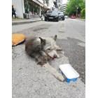 Съкварталци спасиха премазано куче