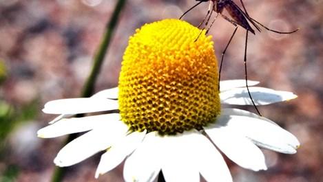 Опасните насекоми: превенция и лечение на ухапвания