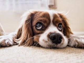 5 признака, че кучето се нуждае от помощ