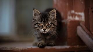 Предимствата на суровата храна за котката