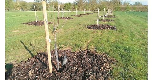 Предстои есенно засаждане на дръвчета