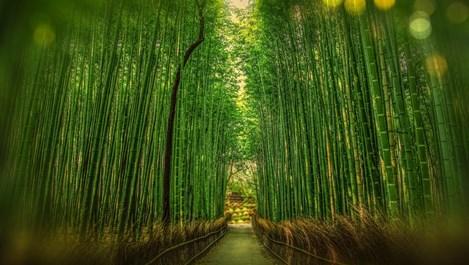 Да бъдем като бамбука – това е ключът към щастието