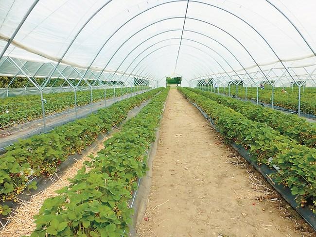 Оранжериите стават все по-предпочитани за производство, тъй като условията на средата в тях се контролират