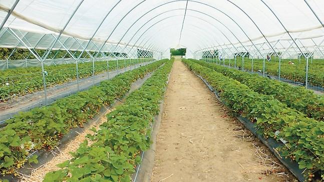 Соларизацията – ефективен и щадящ метод за обеззаразяване на почвата