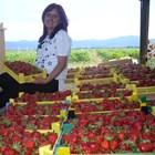 Британци: Българи, елате! Оставаме без плодове