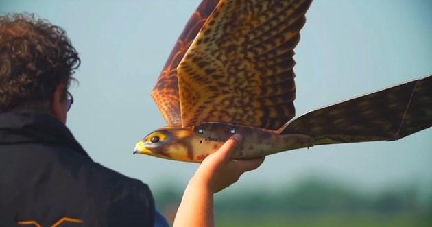 Robird е наистина уникална дистанционно управляема граблива птица