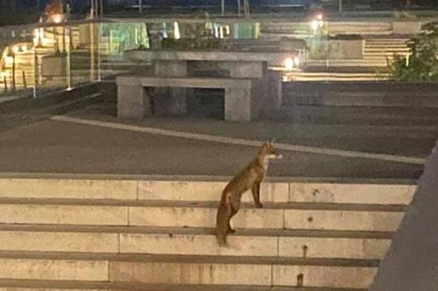 Животното е активно през нощта / Снимки: Фейсбук