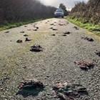 Стотици мъртви птици падат от небето над Уелс (Видео)