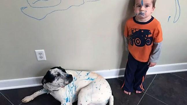 Какво се случва, когато оставите децата и домашните любимци насаме (Снимки)