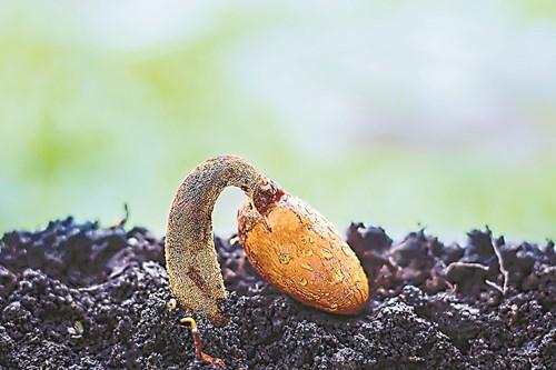 4 съвета за съхранение на семена
