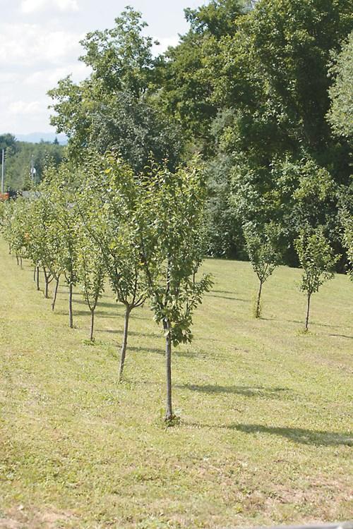 Наторете и обработете почвата в градината