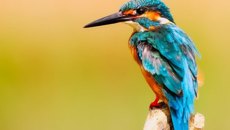 Притча за горделивата птица тoх