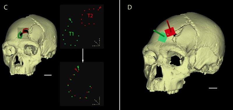 Триизмерен модел на черепа на жертвата