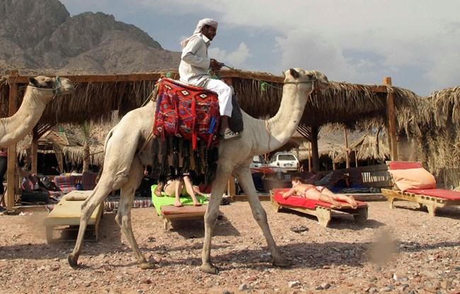 Египетският курорт Дахаб предлага не само отлични условия за гмуркане, но и яздене на камили.