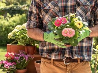 Кои са най-полезните саксийни цветя за здравето