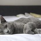 Котките не са заплаха, дръжте ги у дома
