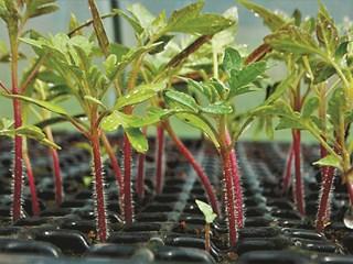 Подготовка за разсадите