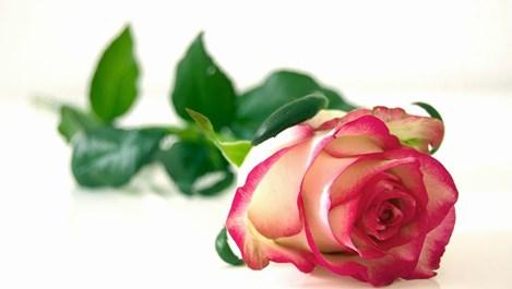 Розовото масло - пренебрегнатото чудо за кожата (+рецепти за маски)