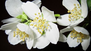 Какви цветя садим през пролетта