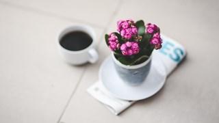 Цветя за здраве и късмет в дома ни