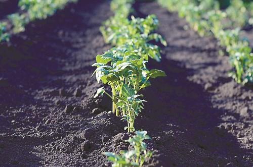 Сезонни грижи в зеленчуковите лехи