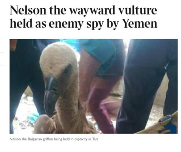 """""""Таймс"""": Българският лешояд Нелсън е задържан за шпионаж в Йемен"""
