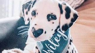Уайли - кучето със сърце на носа (Снимки)