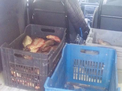 ИАРА Варна дари 30 кг. контрабандна каракуда ва Зоопарка
