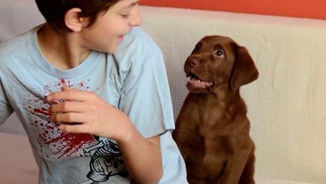 Как животните възпитават децата