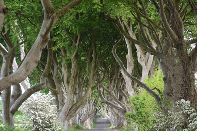 Пътят до Кралски чертог - Тъмните плетове, Северна Ирландия