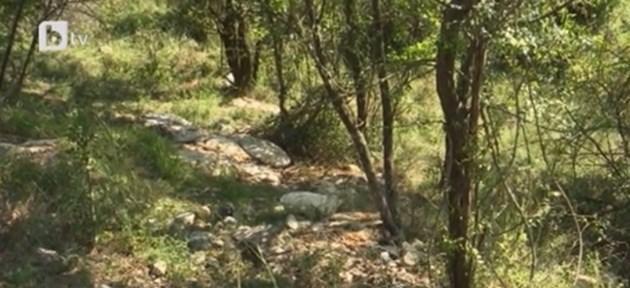 Откриха части от трупове на прасета в дере край село Гавраилово
