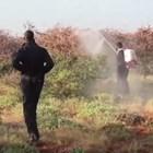 Нашествие на скакалци обрича на глад Етиопия, Кения и Сомалия (Видео)