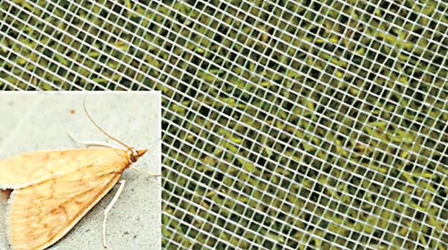 Сигурна защита и срещу насекоми
