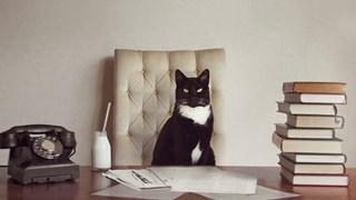 Невероятни котки-модели (галерия)