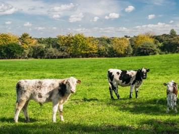135 млн.евро отпусна Холандия за подпомагане на кръговото земеделие